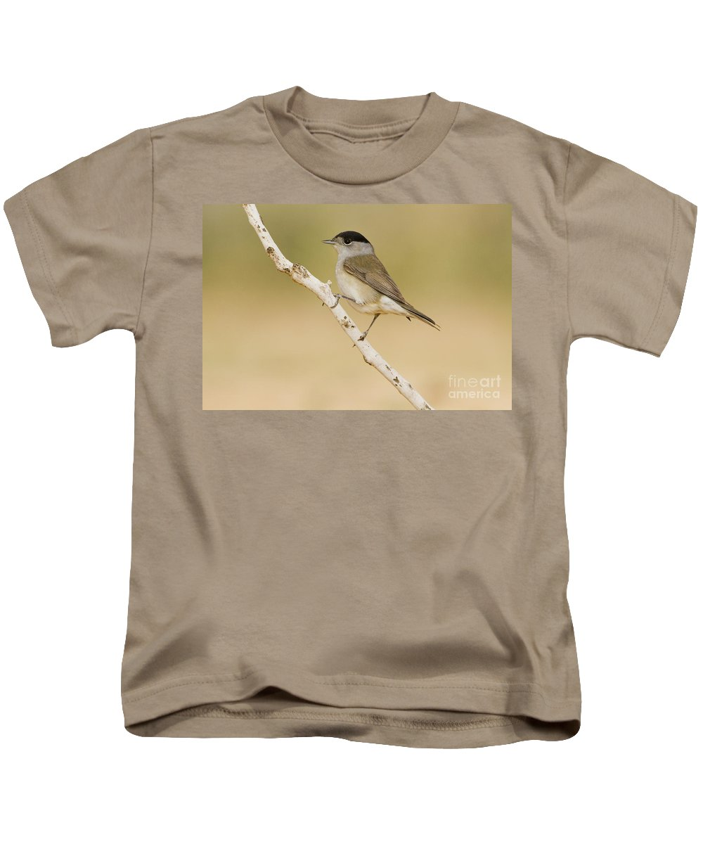 Blackcap Kids T-Shirt featuring the photograph Male Eurasian Blackcap by Eyal Bartov