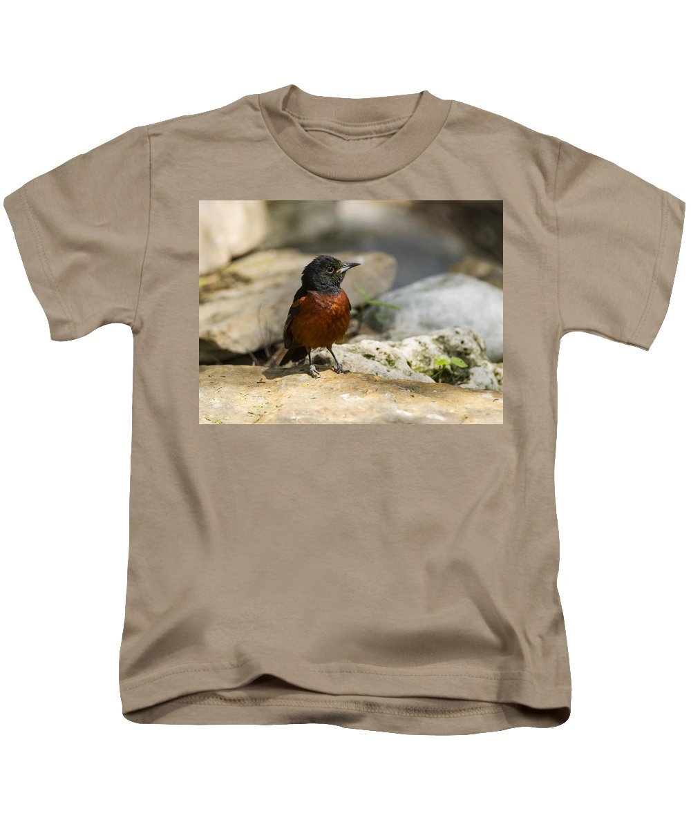 Doug Lloyd Kids T-Shirt featuring the photograph Baltimore Oriole by Doug Lloyd