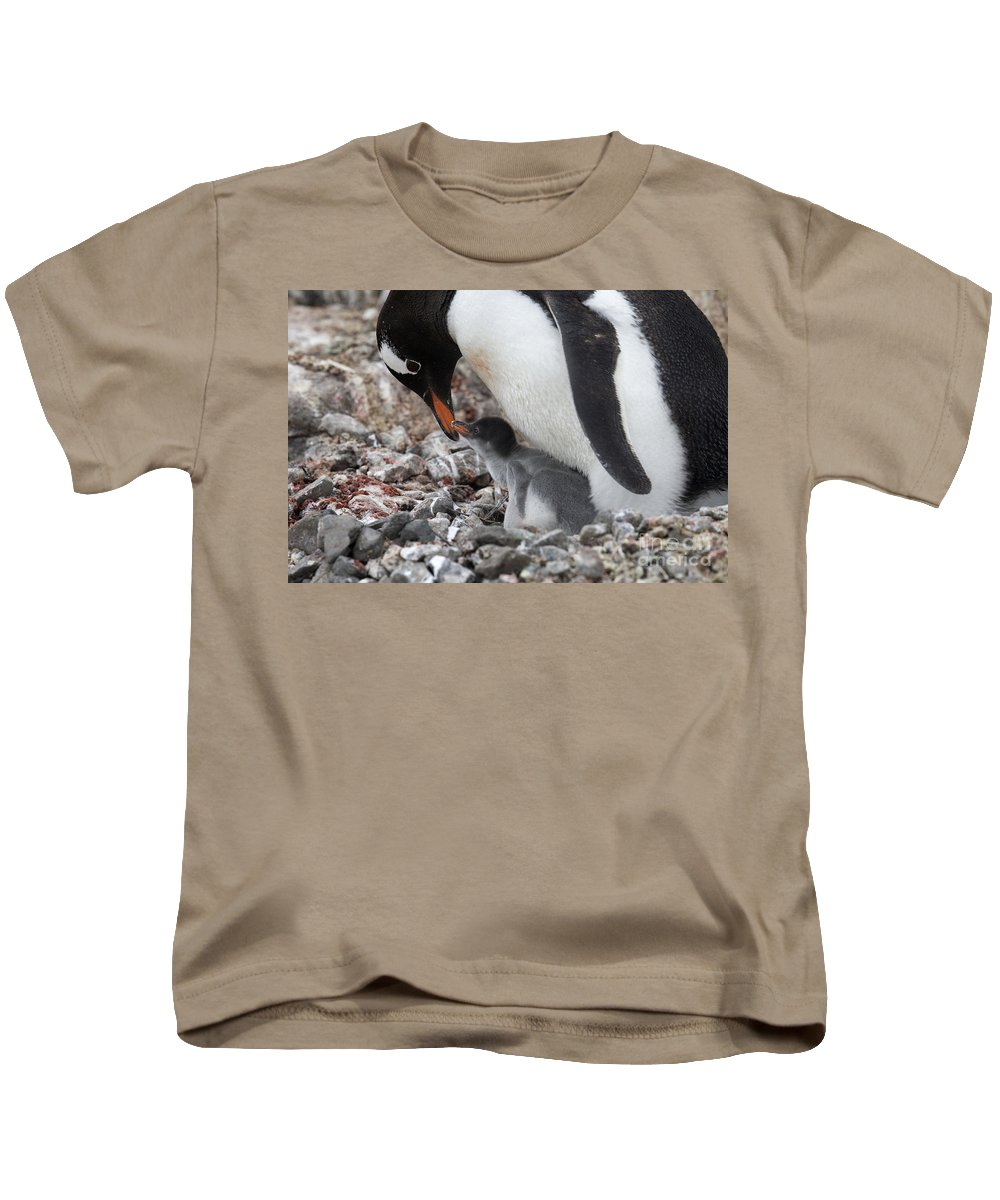 Port Lockroy Kids T-Shirt featuring the photograph 111130p167 by Arterra Picture Library