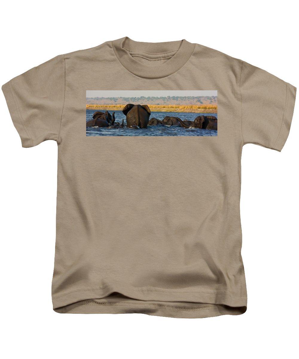 Elephants Kids T-Shirt featuring the photograph Kalahari Elephants Crossing Chobe River by Amanda Stadther