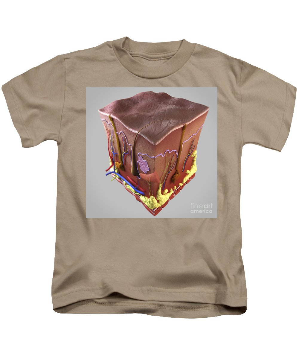 Biomedical Illustration Kids T-Shirt featuring the photograph Anatomy Of Human Skin by Science Picture Co