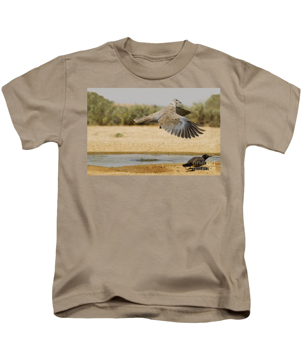 Bird Kids T-Shirt featuring the photograph Collared Dove by Eyal Bartov