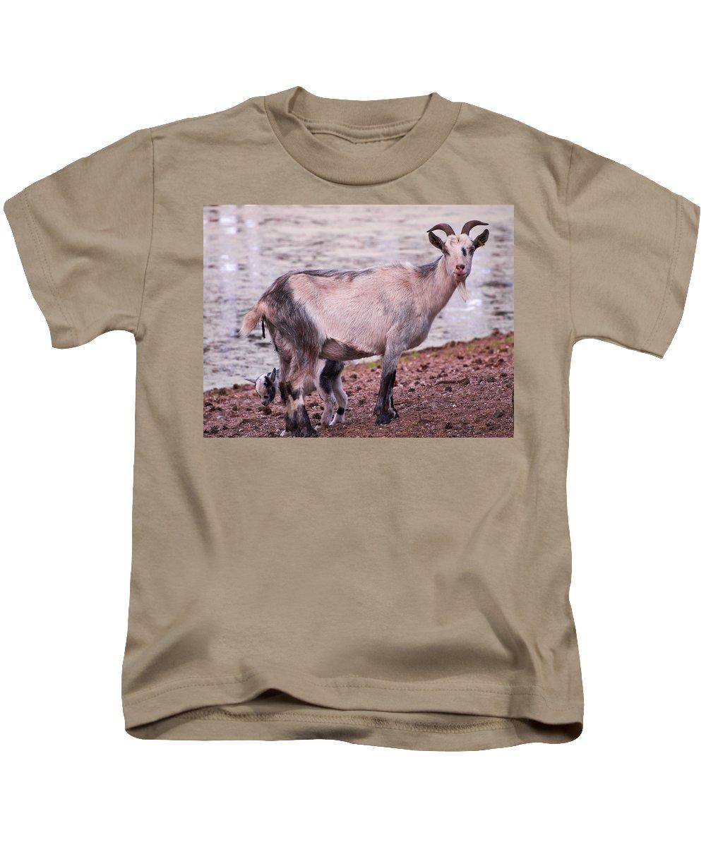 Alankomaat Kids T-Shirt featuring the photograph Goat by Jouko Lehto