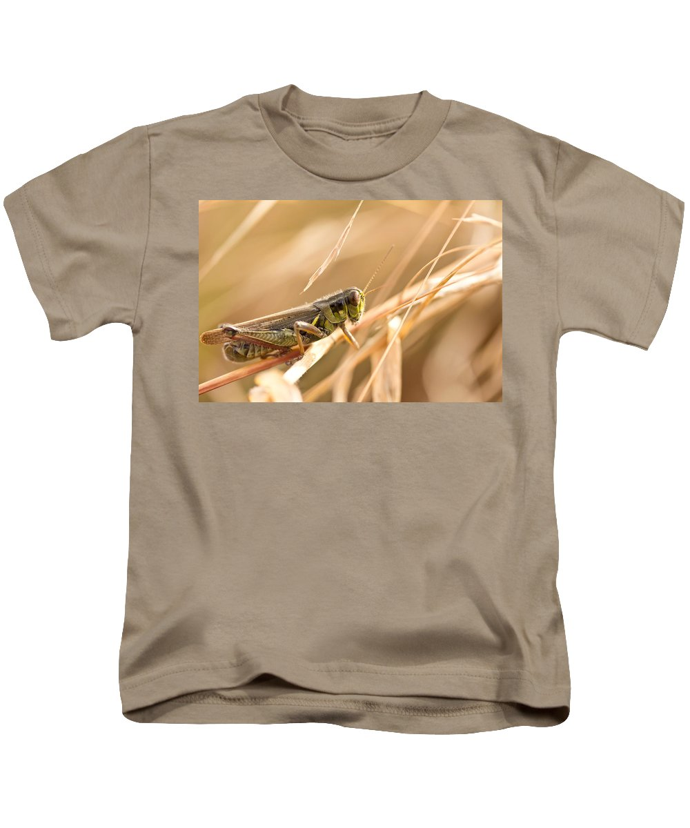 Grasshopper Kids T-Shirt featuring the photograph Hopper In Golden Grass by Shane Holsclaw