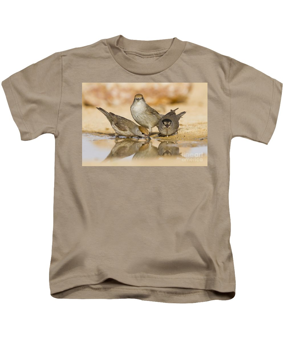 Blackcap Kids T-Shirt featuring the photograph Male And Female Eurasian Blackcaps by Eyal Bartov
