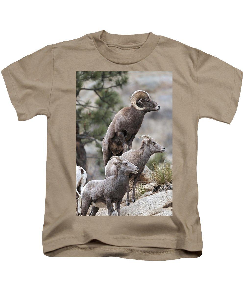 Rocky Mountain Big Horns Kids T-Shirt featuring the photograph Rocky Mountain Big Horns by Gary Langley