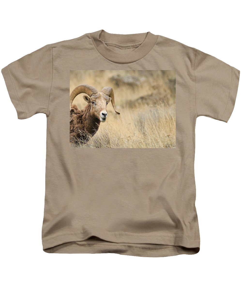 Bighorn Sheep Kids T-Shirt featuring the photograph Sneaking A Bite by Steve McKinzie
