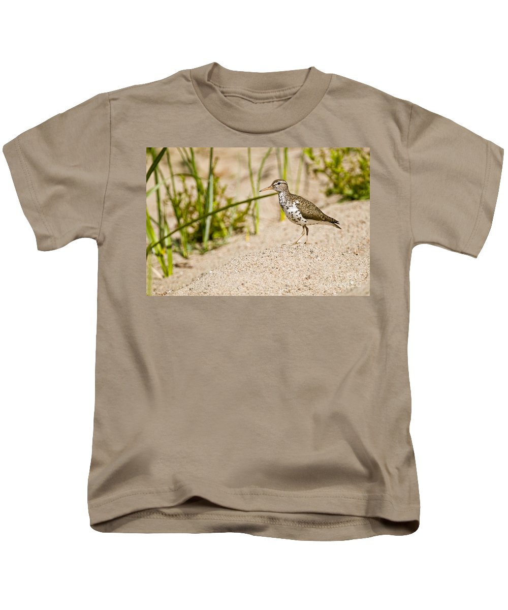 Spotted Sandpiper Kids T-Shirt featuring the photograph Spotted Sandpiper Pictures 45 by World Wildlife Photography