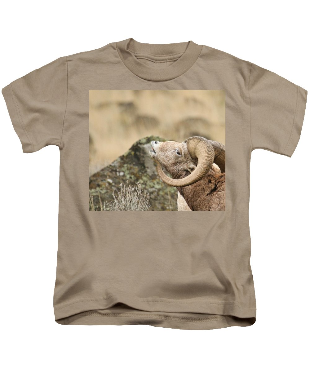 Bighorn Sheep Kids T-Shirt featuring the photograph The Call by Steve McKinzie