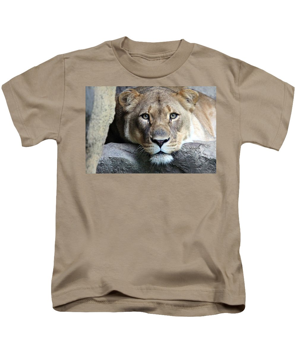Lion Kids T-Shirt featuring the photograph The Lion Queen by Christopher Miles Carter