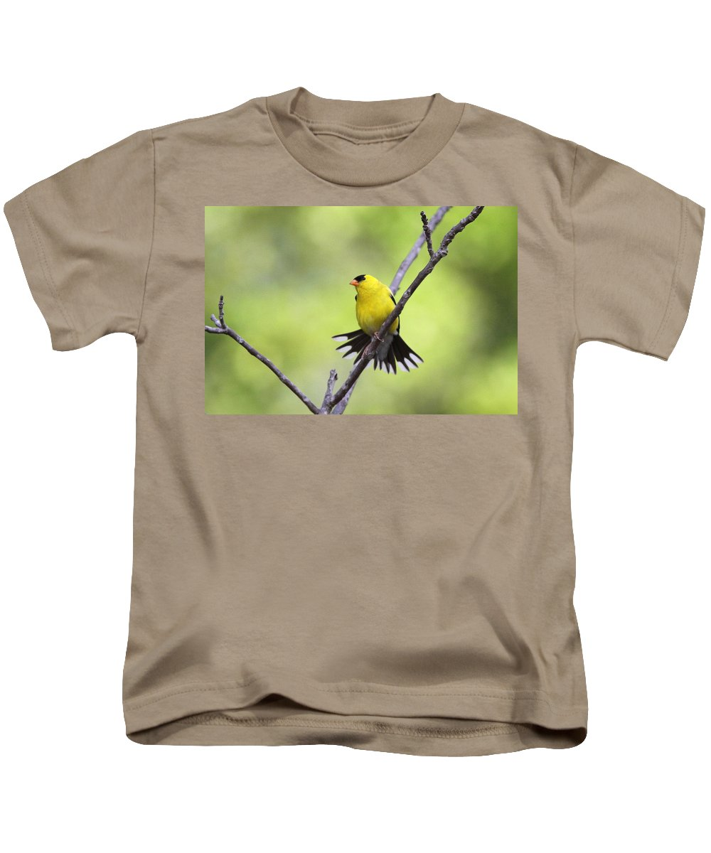 Goldfinch Kids T-Shirt featuring the photograph A Stretch Showing Beauty by Travis Truelove