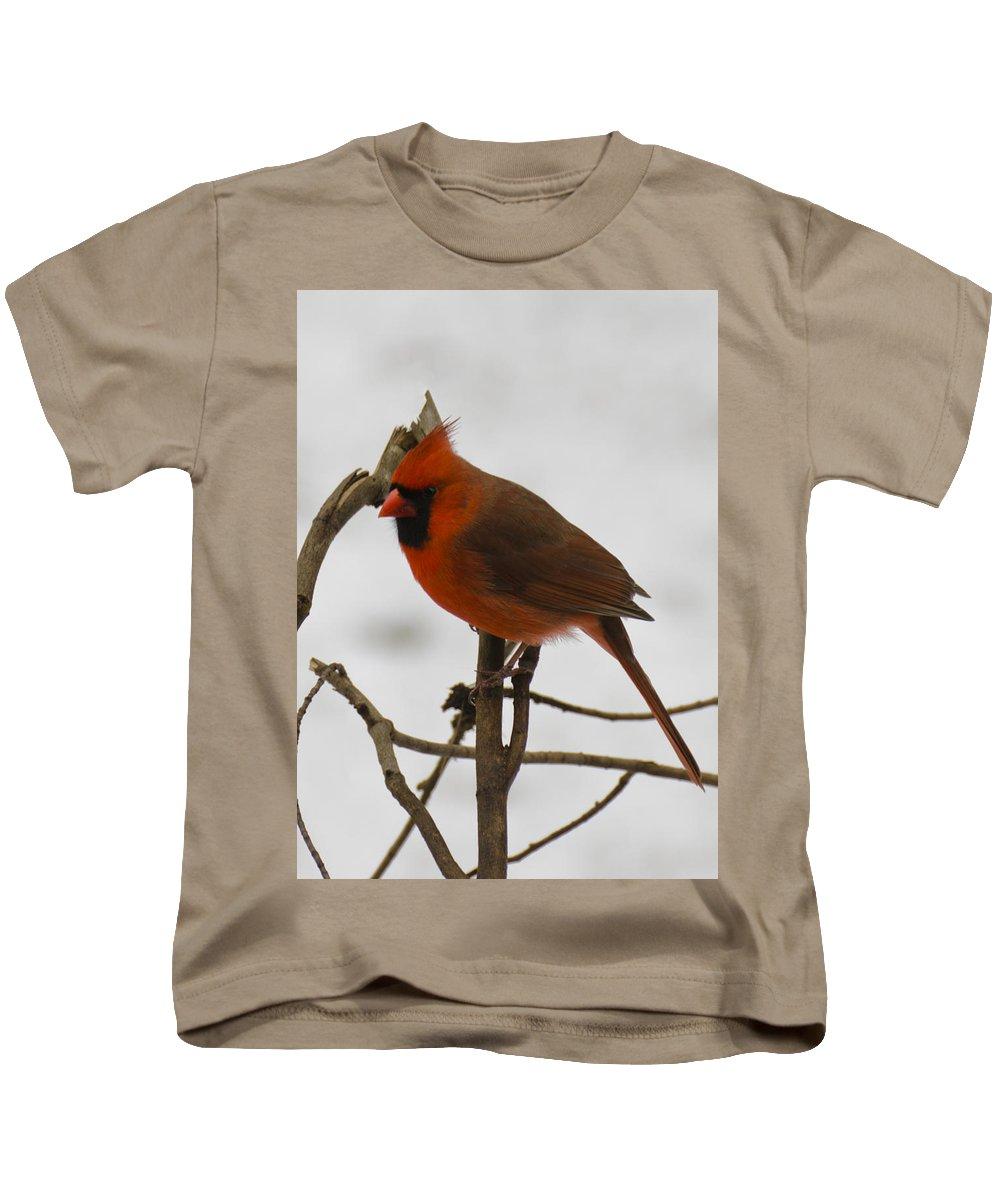 Usa Kids T-Shirt featuring the photograph Beautiful Cardinal by LeeAnn McLaneGoetz McLaneGoetzStudioLLCcom