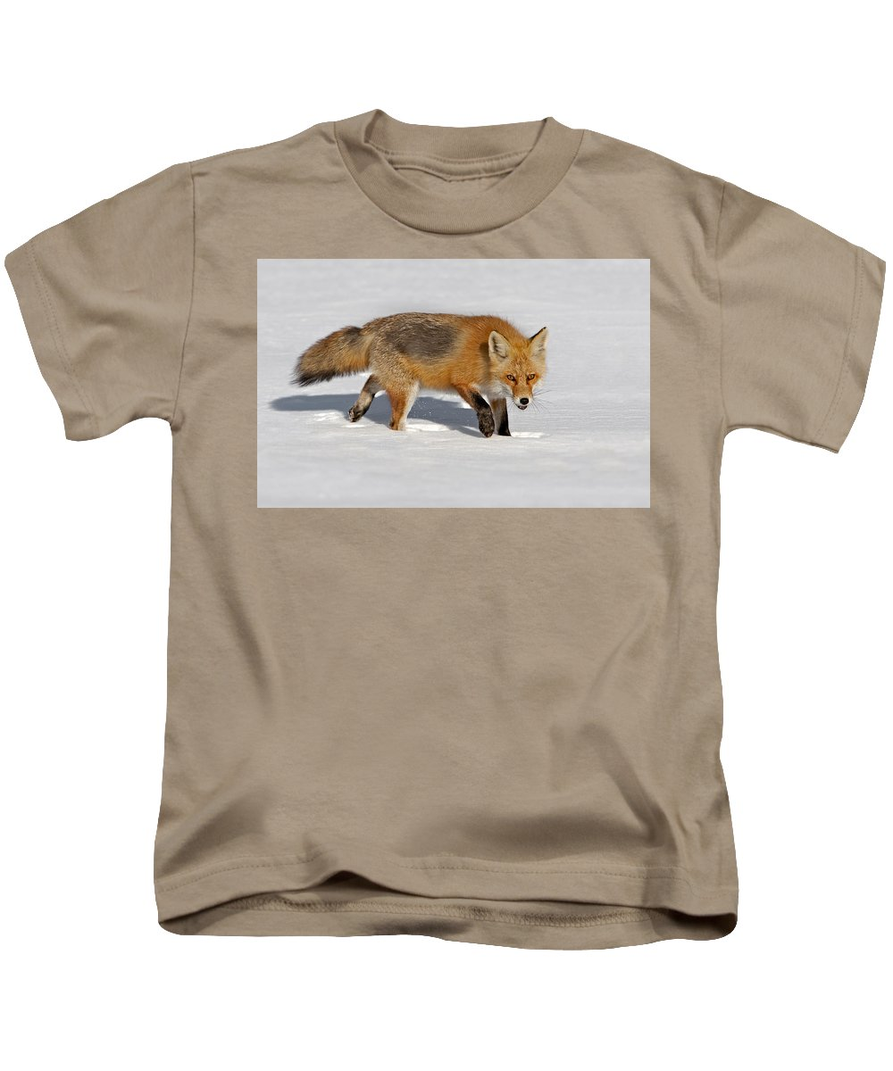 Red Fox Kids T-Shirt featuring the photograph Foxy Lady by Susan Candelario