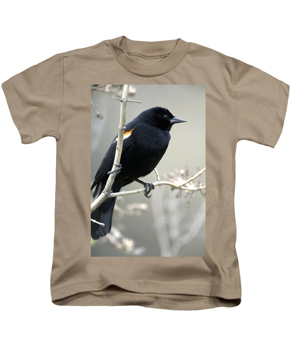 Blackbirds Kids T-Shirt featuring the photograph Red-winged Blackbird Agelaius by Philippe Henry