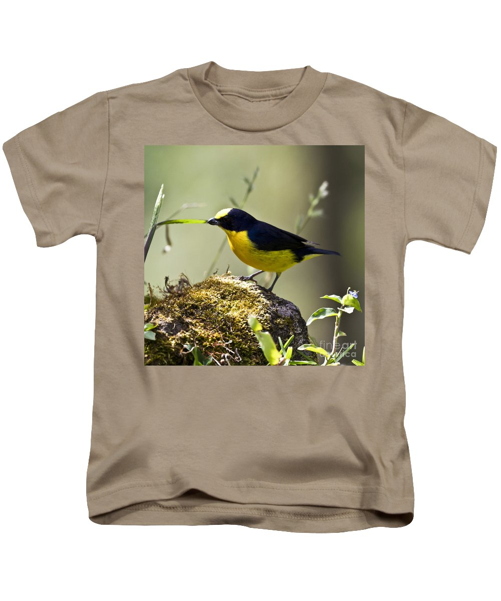 Euphonia Kids T-Shirt featuring the photograph Yellow-crowned Euphonia by Heiko Koehrer-Wagner