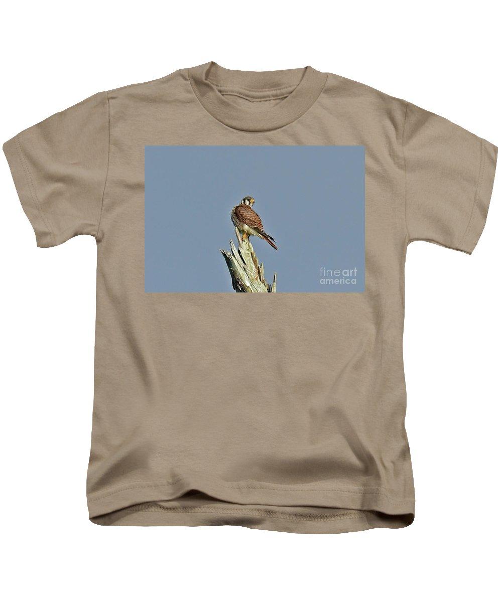 Kids T-Shirt featuring the photograph American Kestrel by Liz Grindstaff