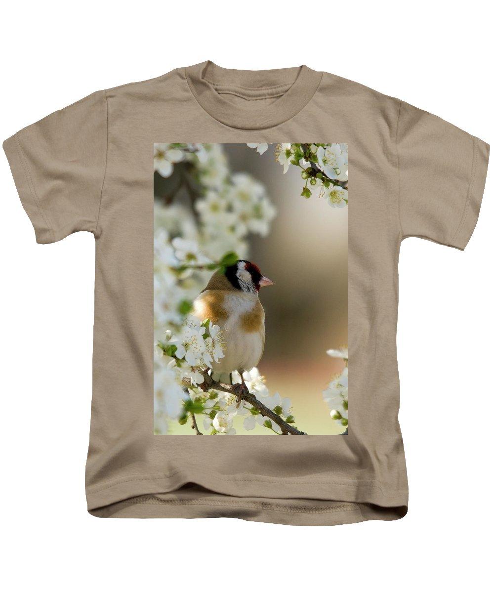 Goldfinch Spring Blossom Kids T-Shirt featuring the photograph Goldfinch Spring Blossom by Cliff Norton