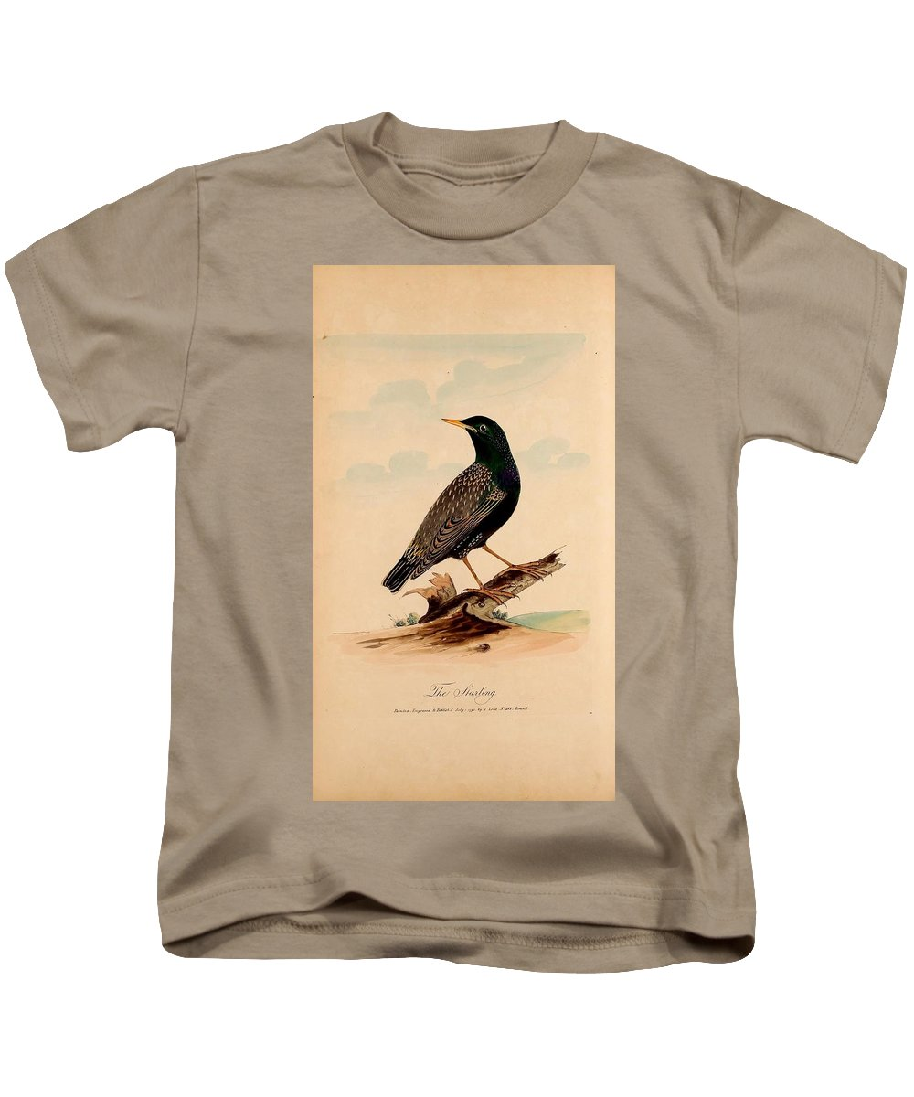 Lord's Entire New System Of Ornithology Kids T-Shirt featuring the painting New System Of Ornithology by MotionAge Designs