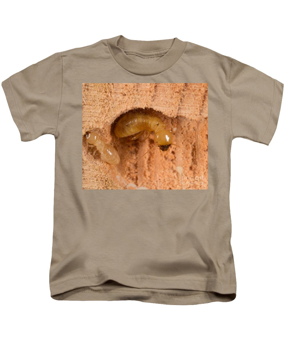 Nymph Workers Kids T-Shirt featuring the photograph Pacific Dampwood Termites by Ted Kinsman