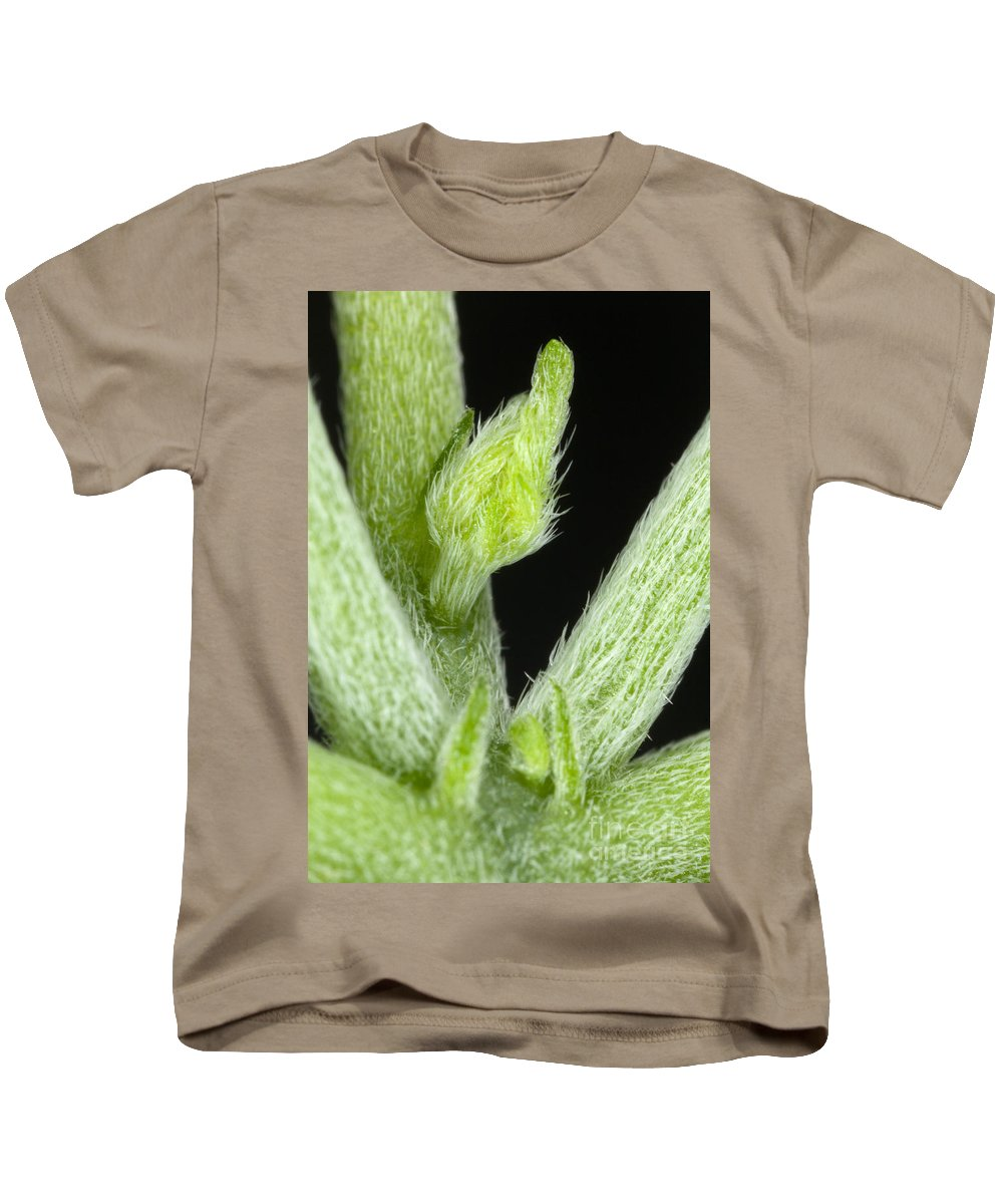 Node Kids T-Shirt featuring the photograph Node And Petioles On A Marijuana Plant by Ted Kinsman