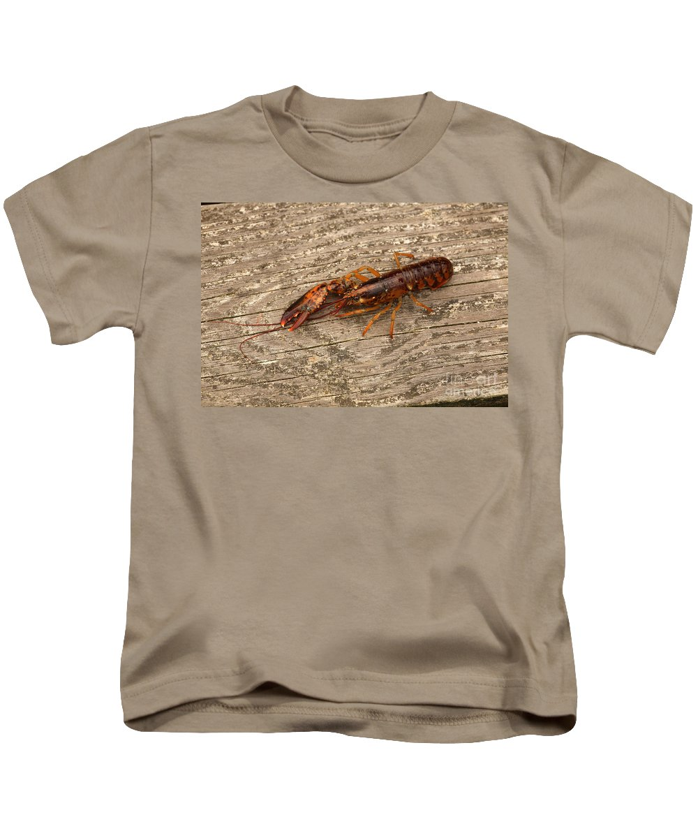 Northern Lobster Kids T-Shirt featuring the photograph Young Lobster by Ted Kinsman