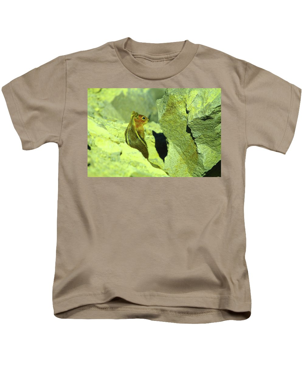 Chipmunks Kids T-Shirt featuring the photograph A Perky Chipmunk by Jeff Swan