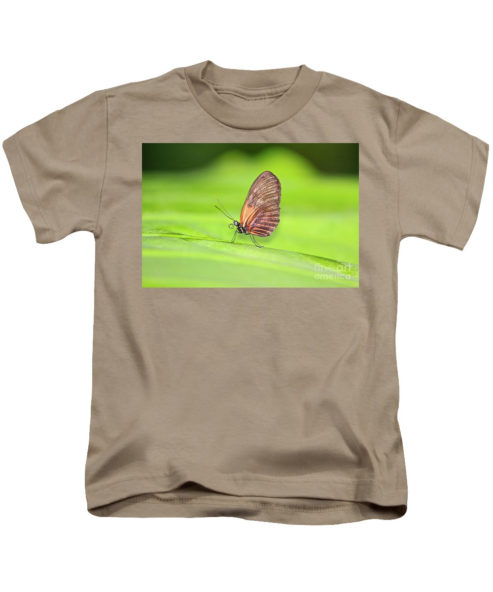 Central America Kids T-Shirt featuring the photograph Banded Orange Butterfly by Robert Pearson