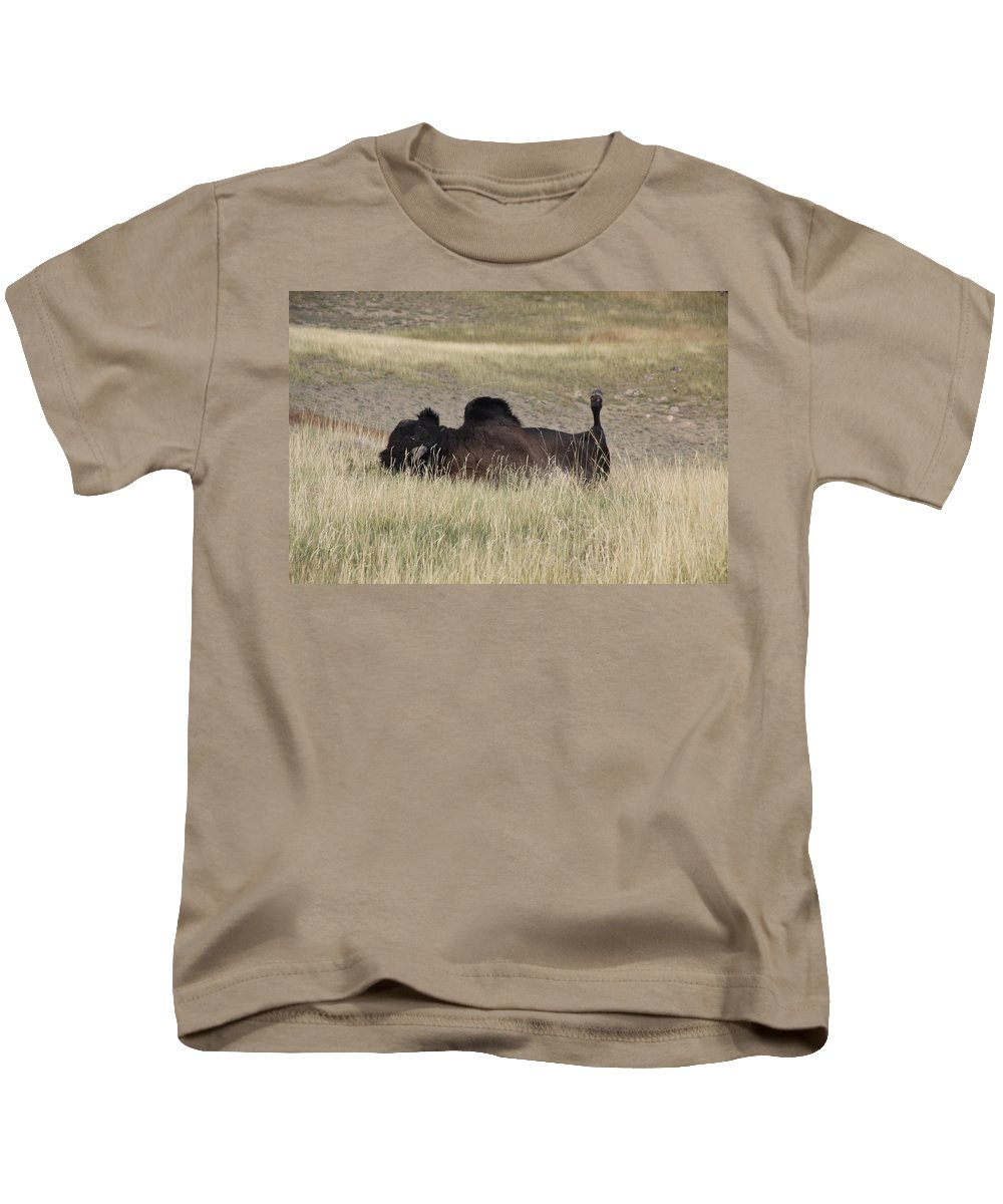 Bison; Yellowstone National Park; Storm Point Trail Kids T-Shirt featuring the photograph Bison Backscratching by Steve Aserkoff