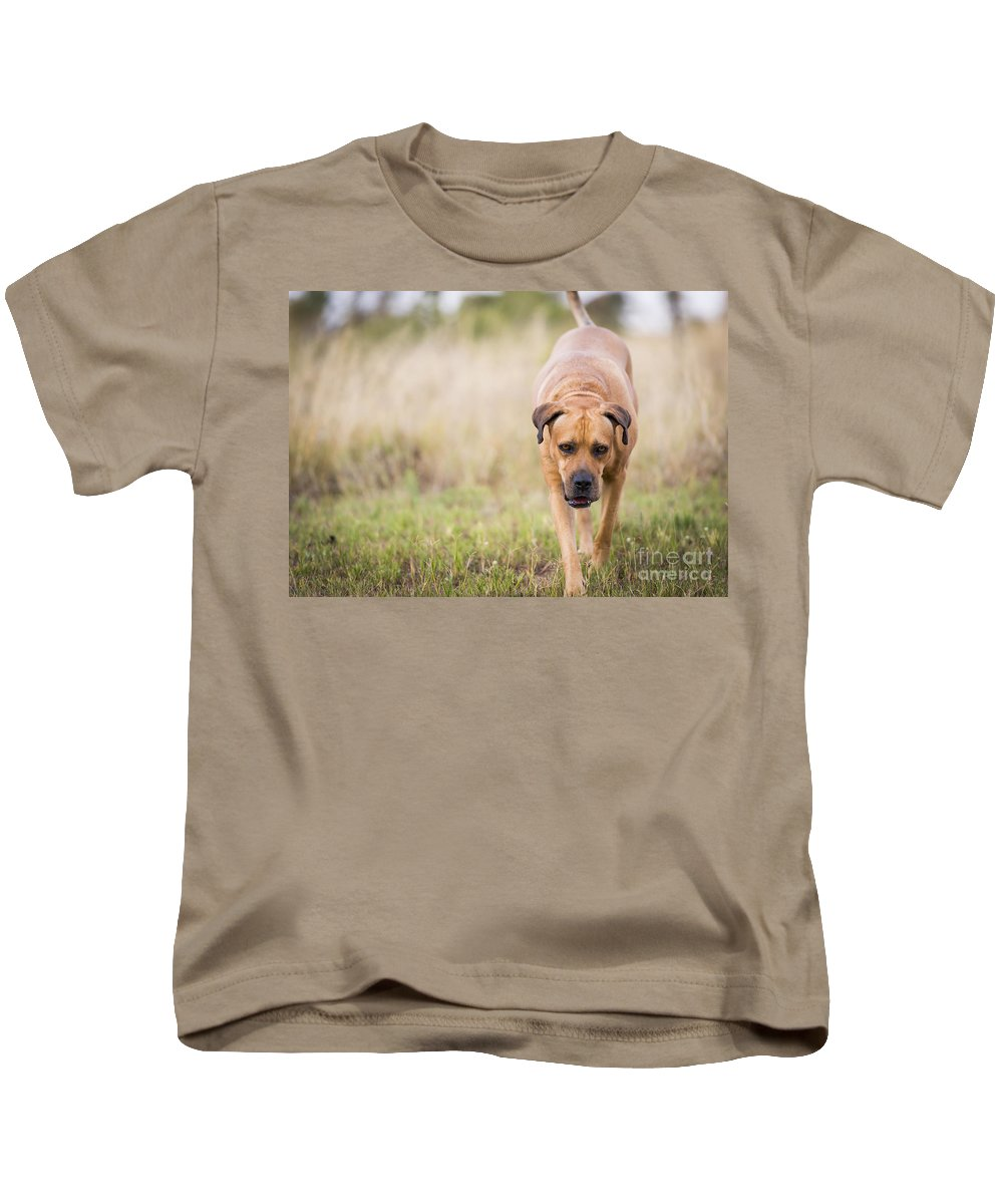 Boerboel Kids T-Shirt featuring the photograph Boerboel Dog by Tim Hester
