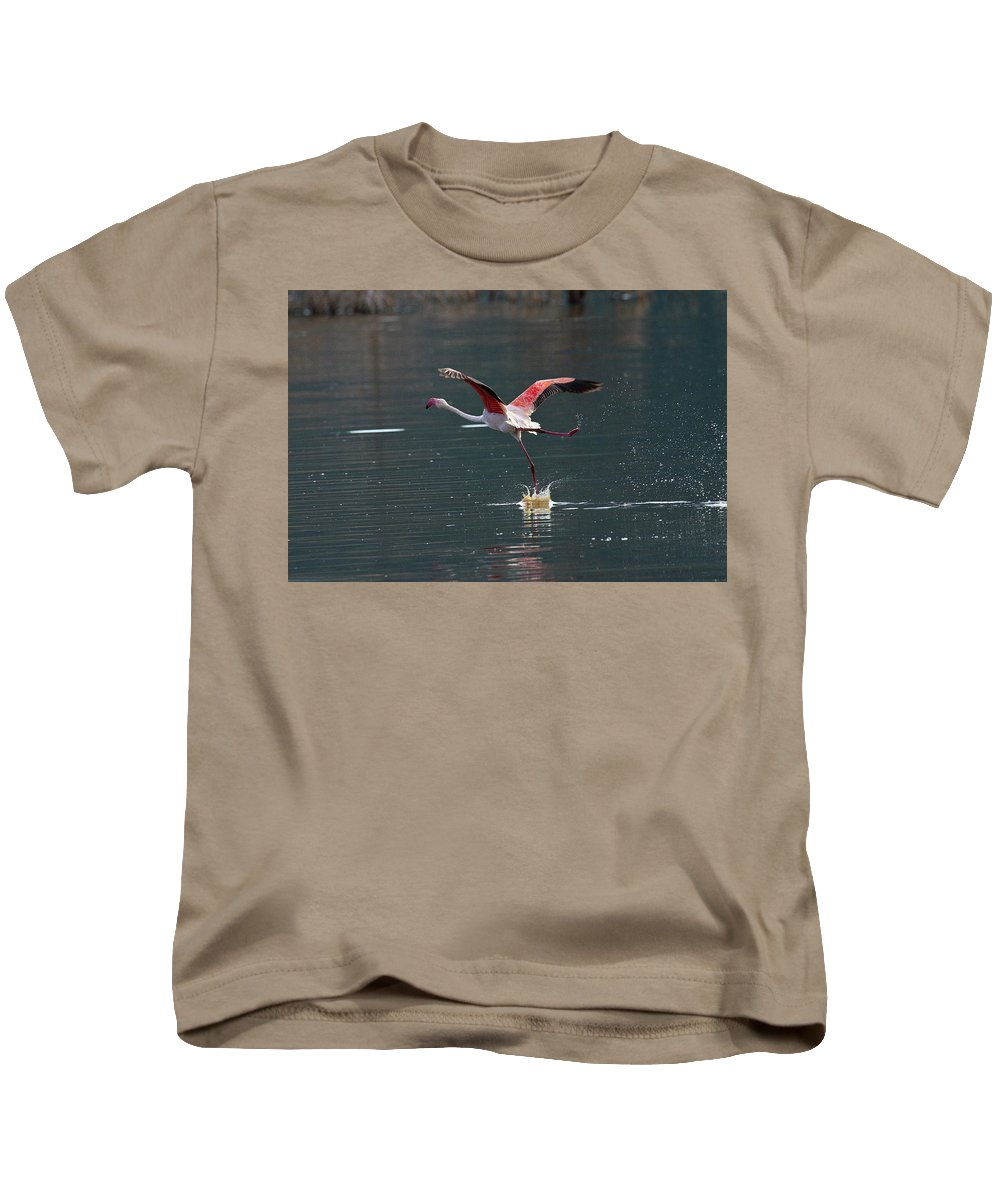 Flamingo Kids T-Shirt featuring the photograph Flamingo Kick Off by Janet Chung