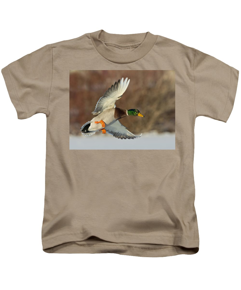 Mallard Kids T-Shirt featuring the photograph Flying Mallard by Steve Oehlenschlager