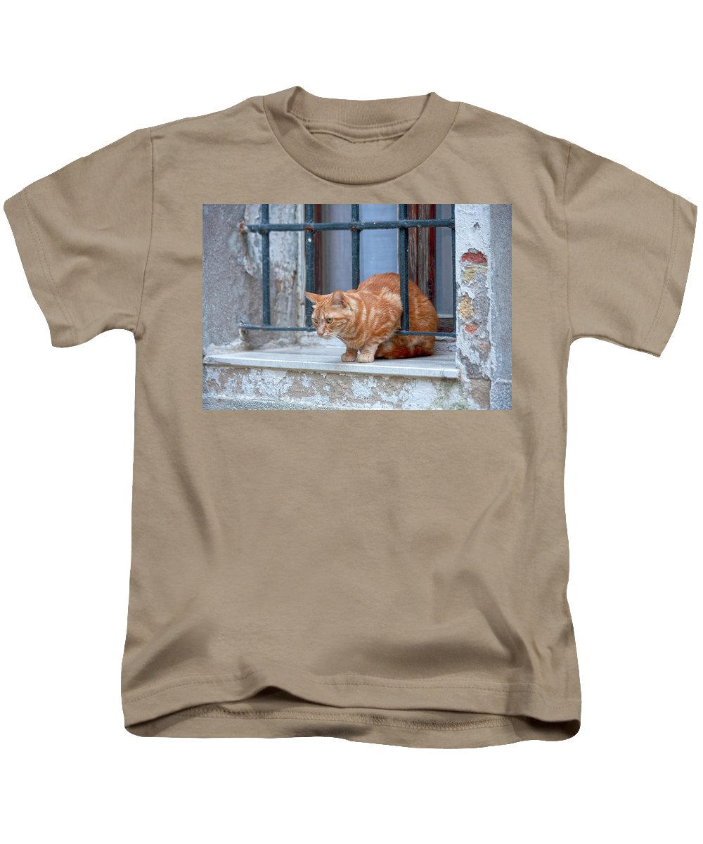 Animal Kids T-Shirt featuring the photograph Just Curious Cat by Heiko Koehrer-Wagner