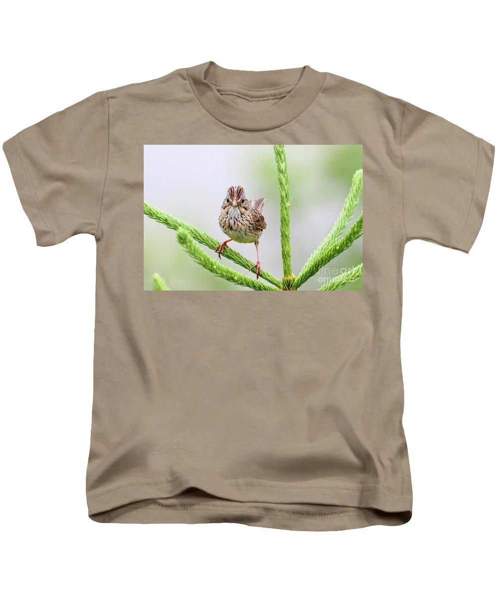 Wildlife Kids T-Shirt featuring the photograph Lincoln's Sparrow by Nicolaas Honig
