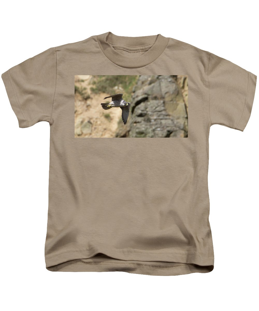 Peregrine Kids T-Shirt featuring the photograph Peregrine Falcon In Flight by Peter Walkden