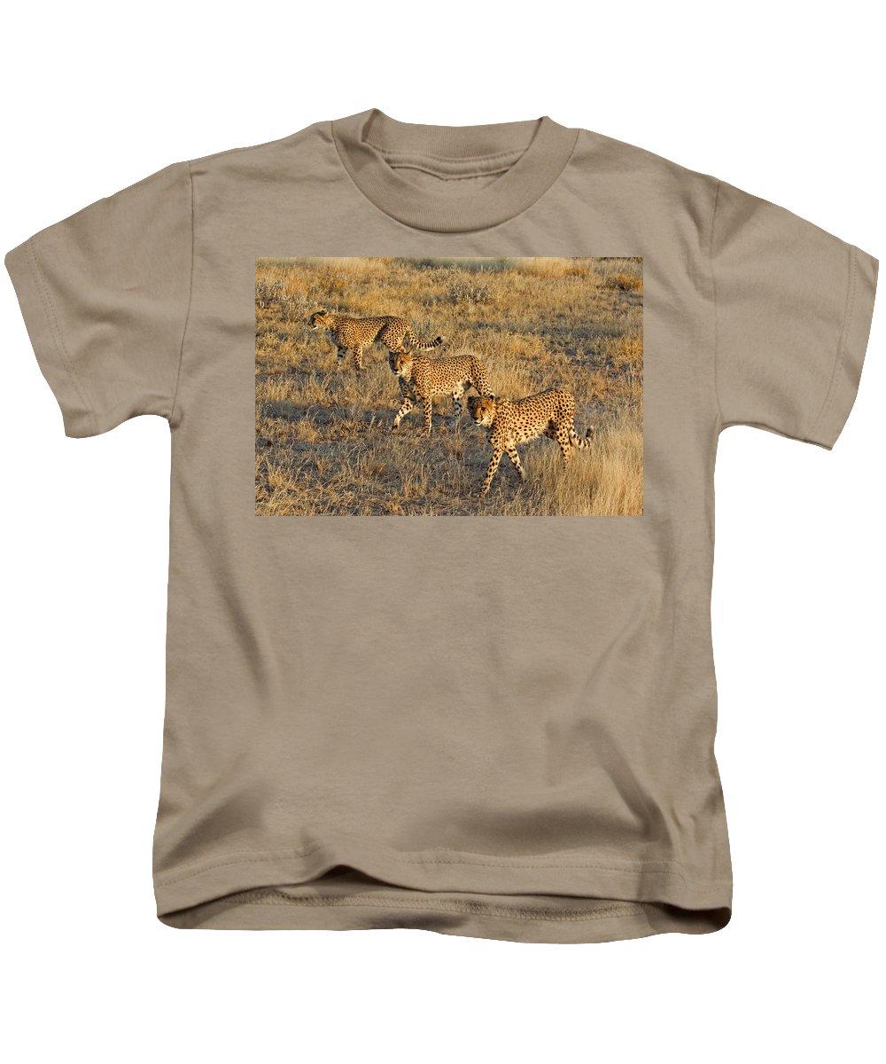 3 Kids T-Shirt featuring the photograph Three Cheetahs by Aivar Mikko