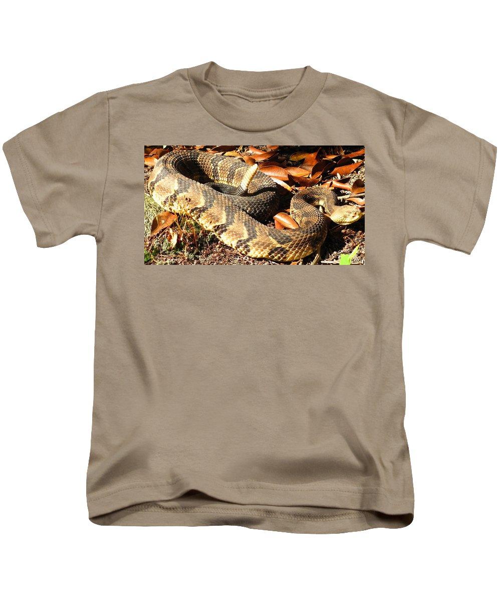 Maryland Timber Rattlesnake Photograph Timber Rattlesnake Canvas Prints Venomous Snake Pit Viper Appalachian Mountain Forest Ecology Reptile Biodiversity Nature Wildlife Fauna Kids T-Shirt featuring the photograph Timber Rattlesnake Horizontal by Joshua Bales