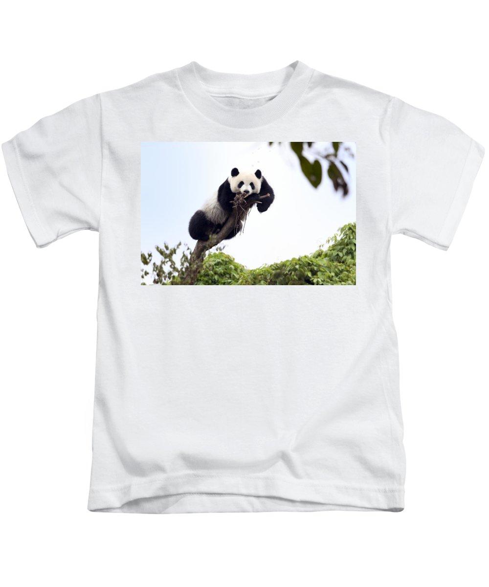 Panda Kids T-Shirt featuring the photograph Cute Young Panda by King Wu