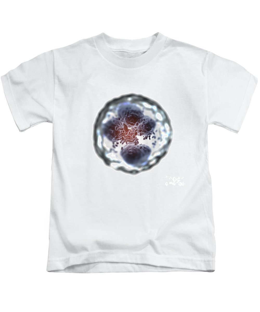 Cells Kids T-Shirt featuring the photograph Neutrophil Cell by Science Picture Co