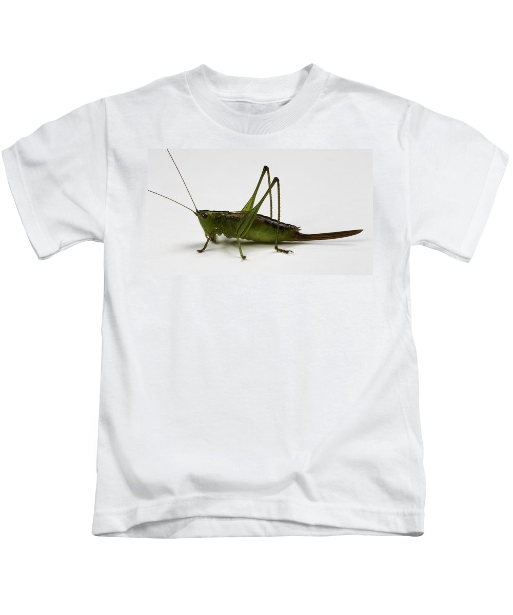 Bug Kids T-Shirt featuring the photograph Short-winged Meadow Katydid by Terry Leasa