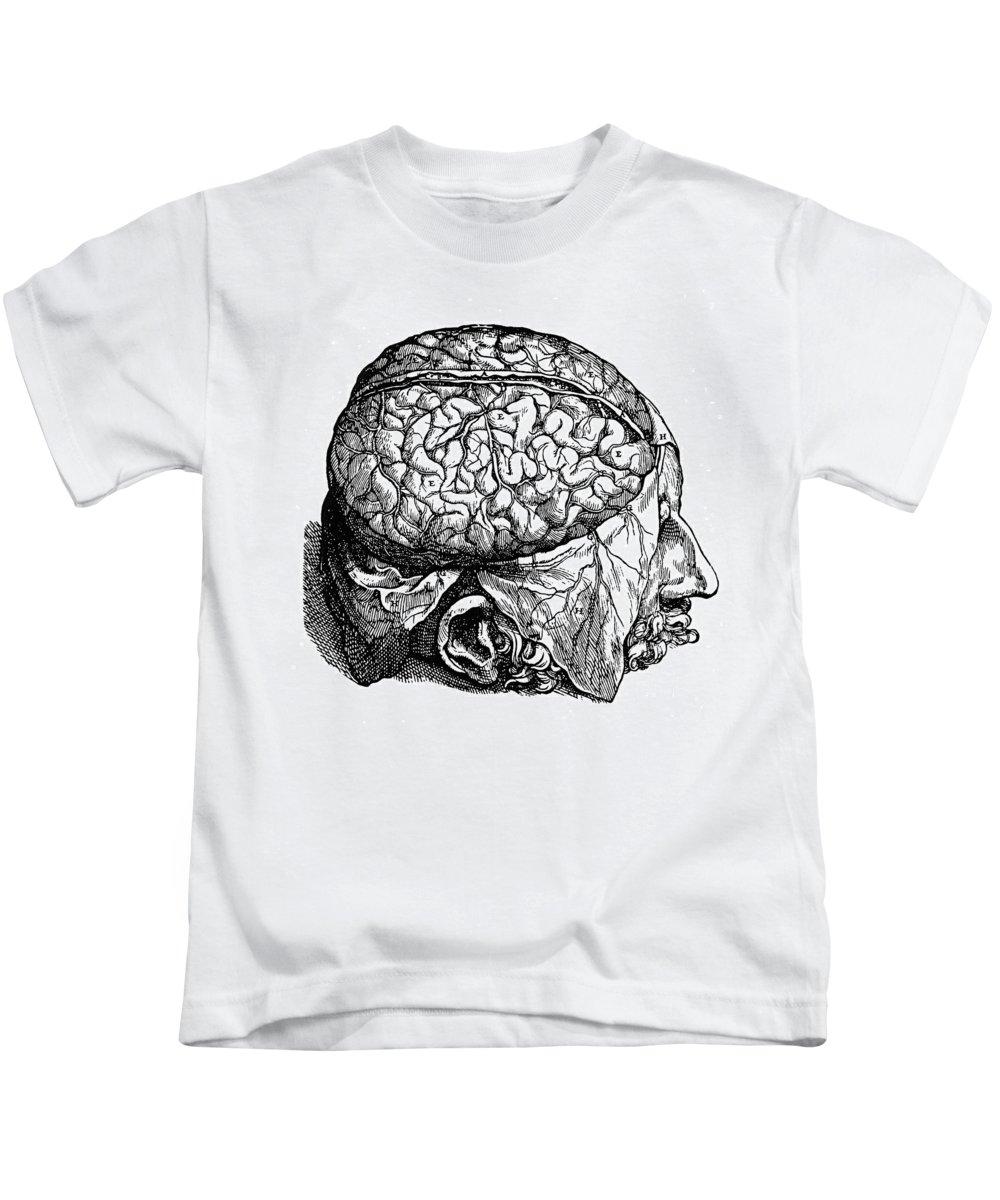 1543 Kids T-Shirt featuring the photograph Vesalius: Brain, 1543 by Granger