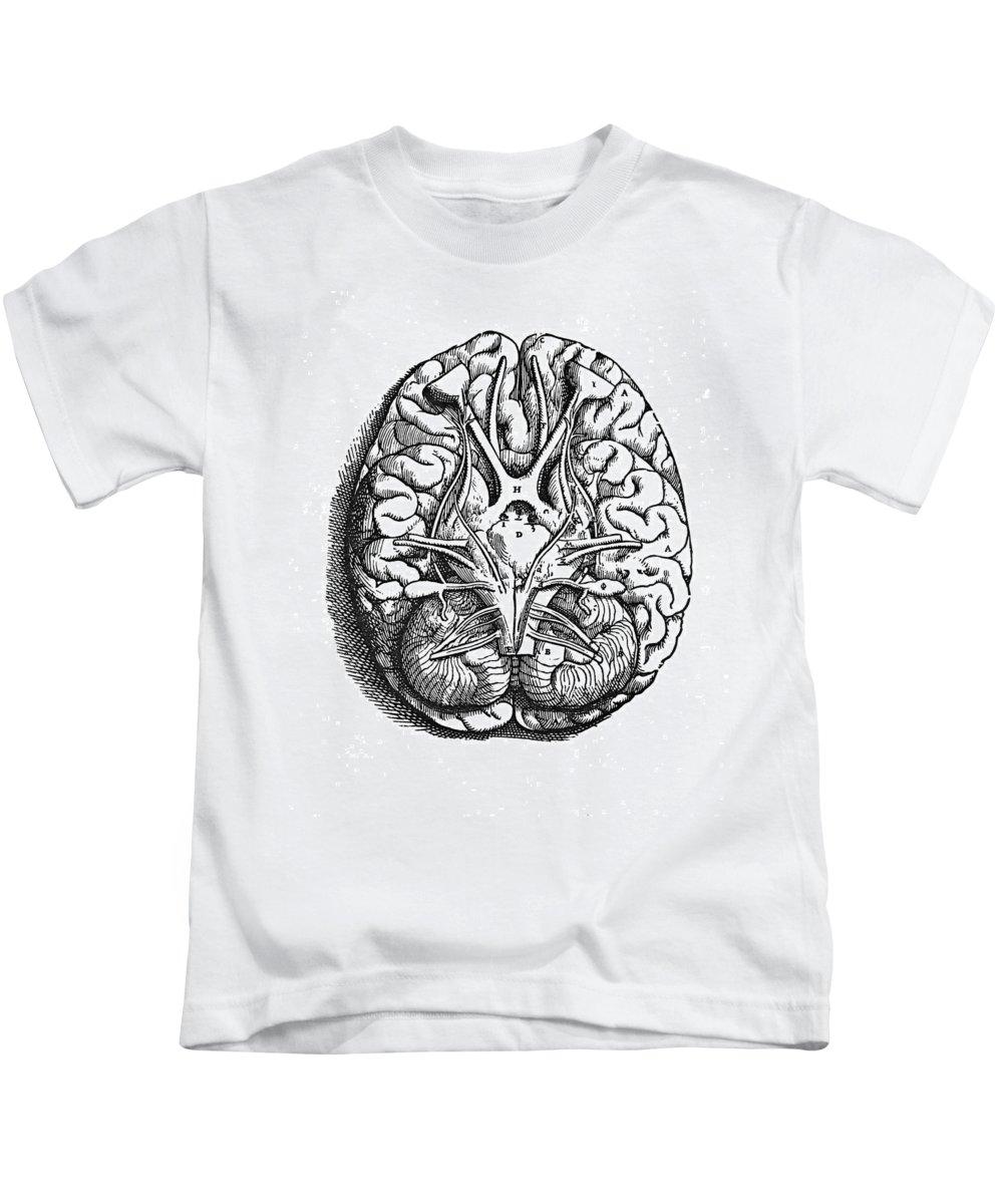 16th Century Kids T-Shirt featuring the photograph Vesalius: Brain by Granger