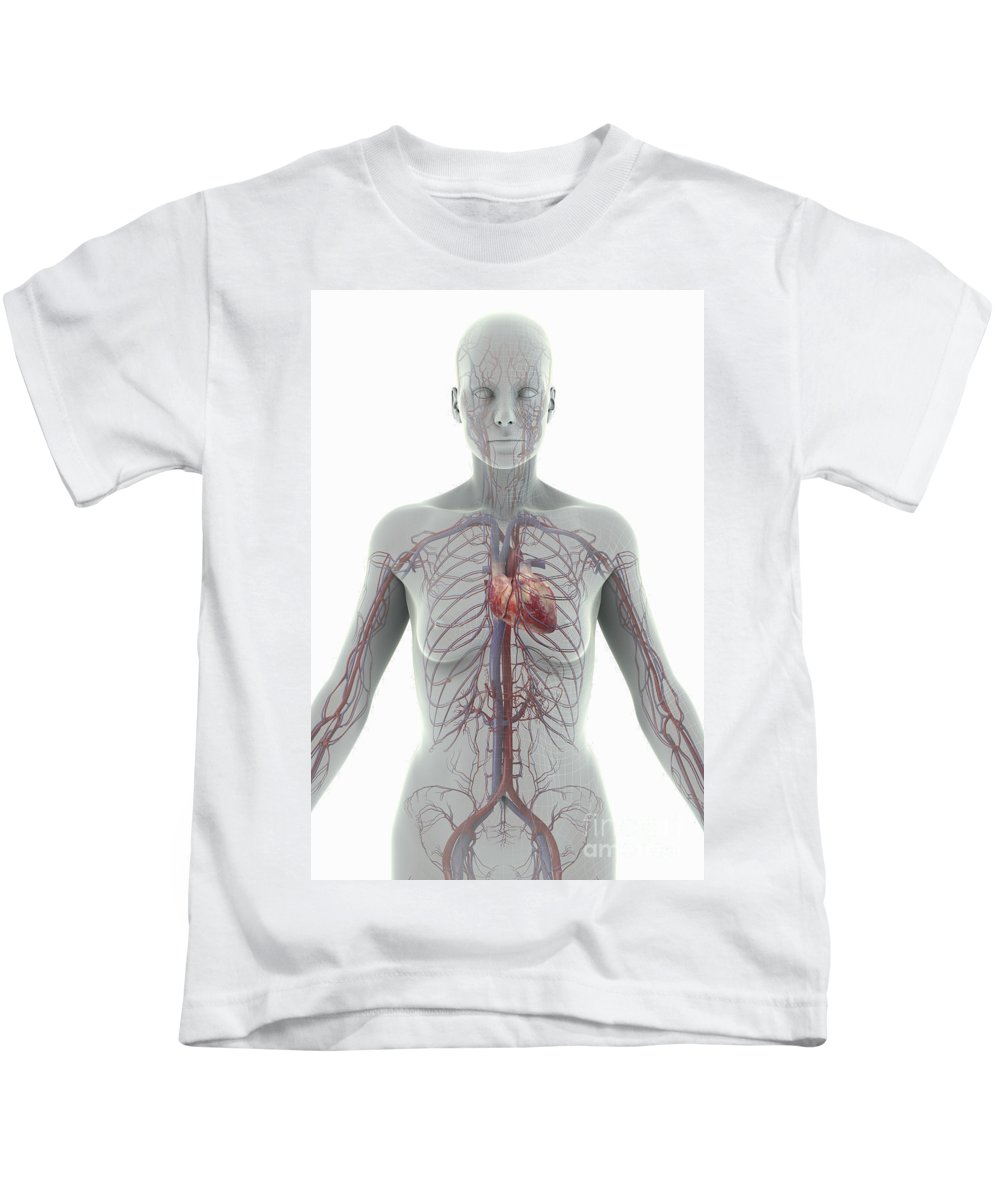 Blood Vessels Kids T-Shirt featuring the photograph The Cardiovascular System Female by Science Picture Co