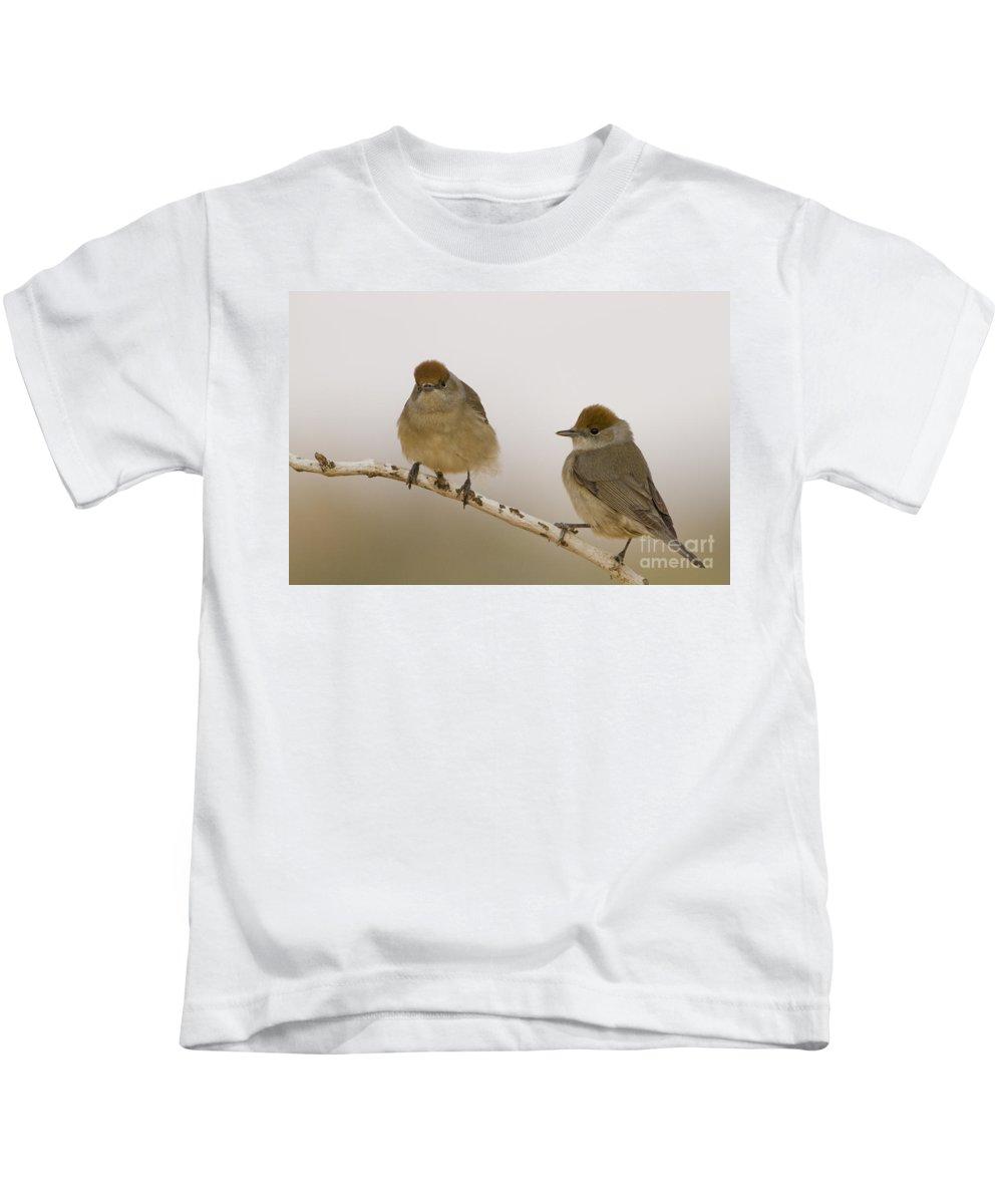 Eurasian Kids T-Shirt featuring the photograph 2 Female Eurasian Blackcaps by Eyal Bartov