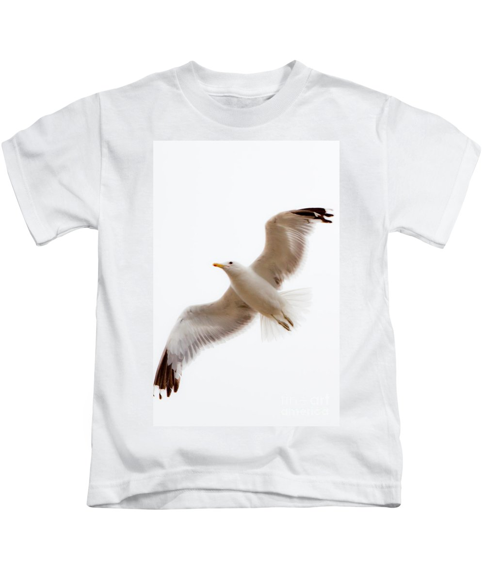 Birds Kids T-Shirt featuring the photograph Solo Flight by Roselynne Broussard