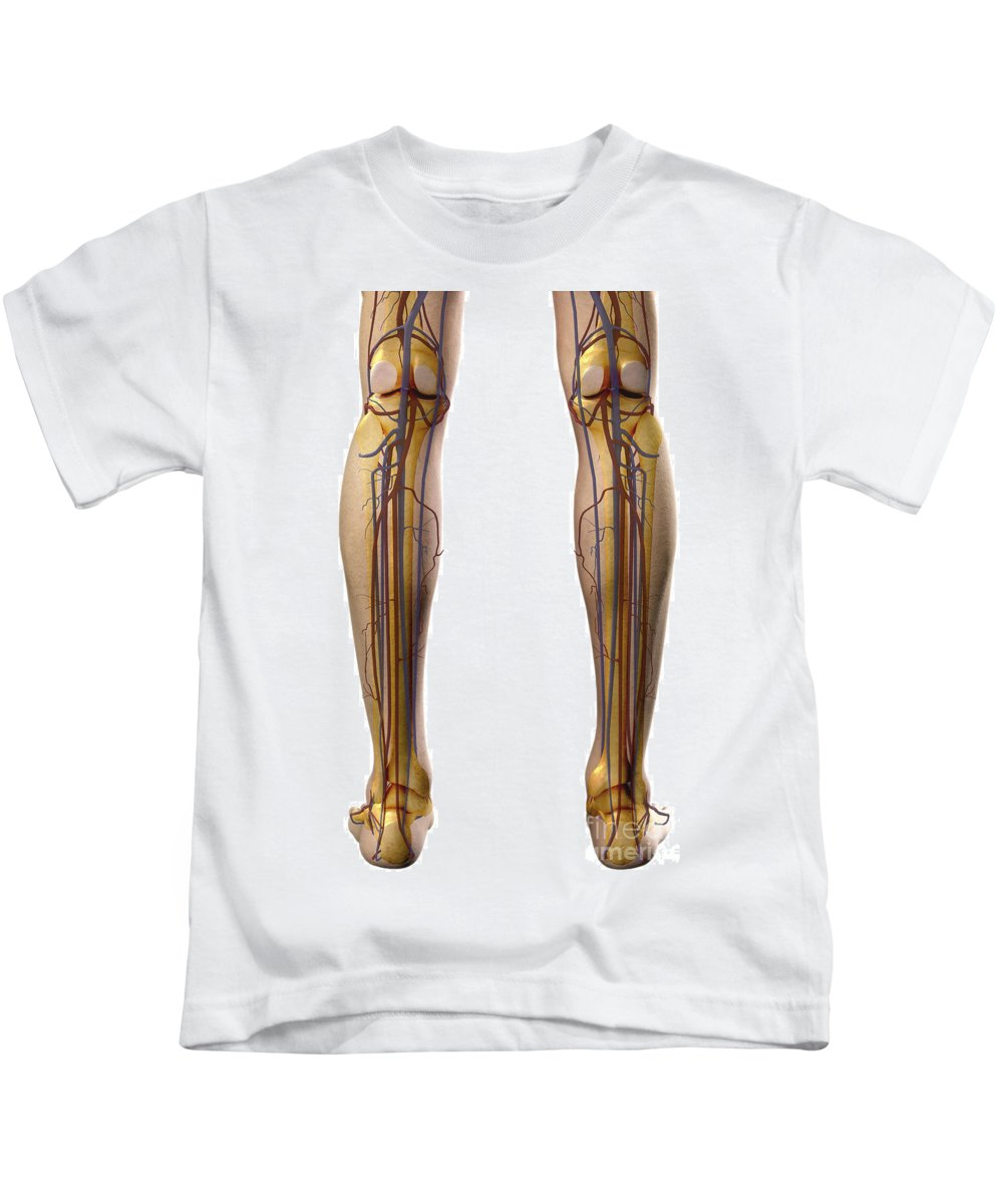 Biomedical Illustration Kids T-Shirt featuring the photograph The Cardiovascular System by Science Picture Co