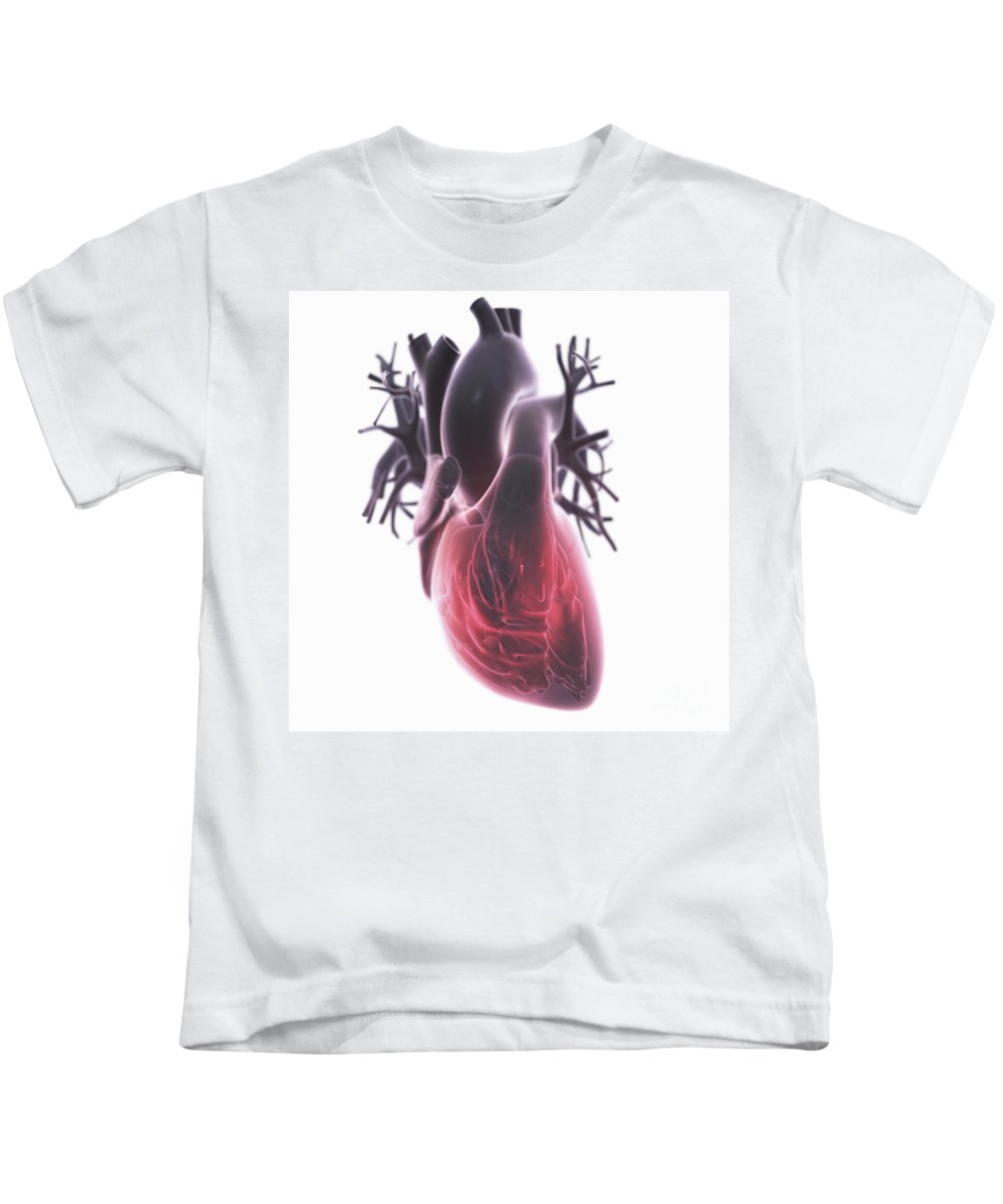 Right Ventricle Kids T-Shirt featuring the photograph Heart Anatomy by Science Picture Co
