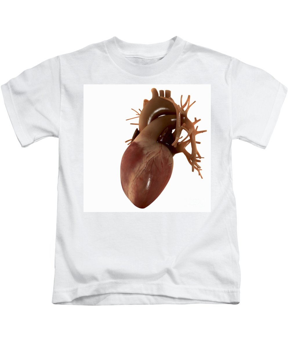 Human Anatomy Kids T-Shirt featuring the photograph Heart Anatomy by Science Picture Co