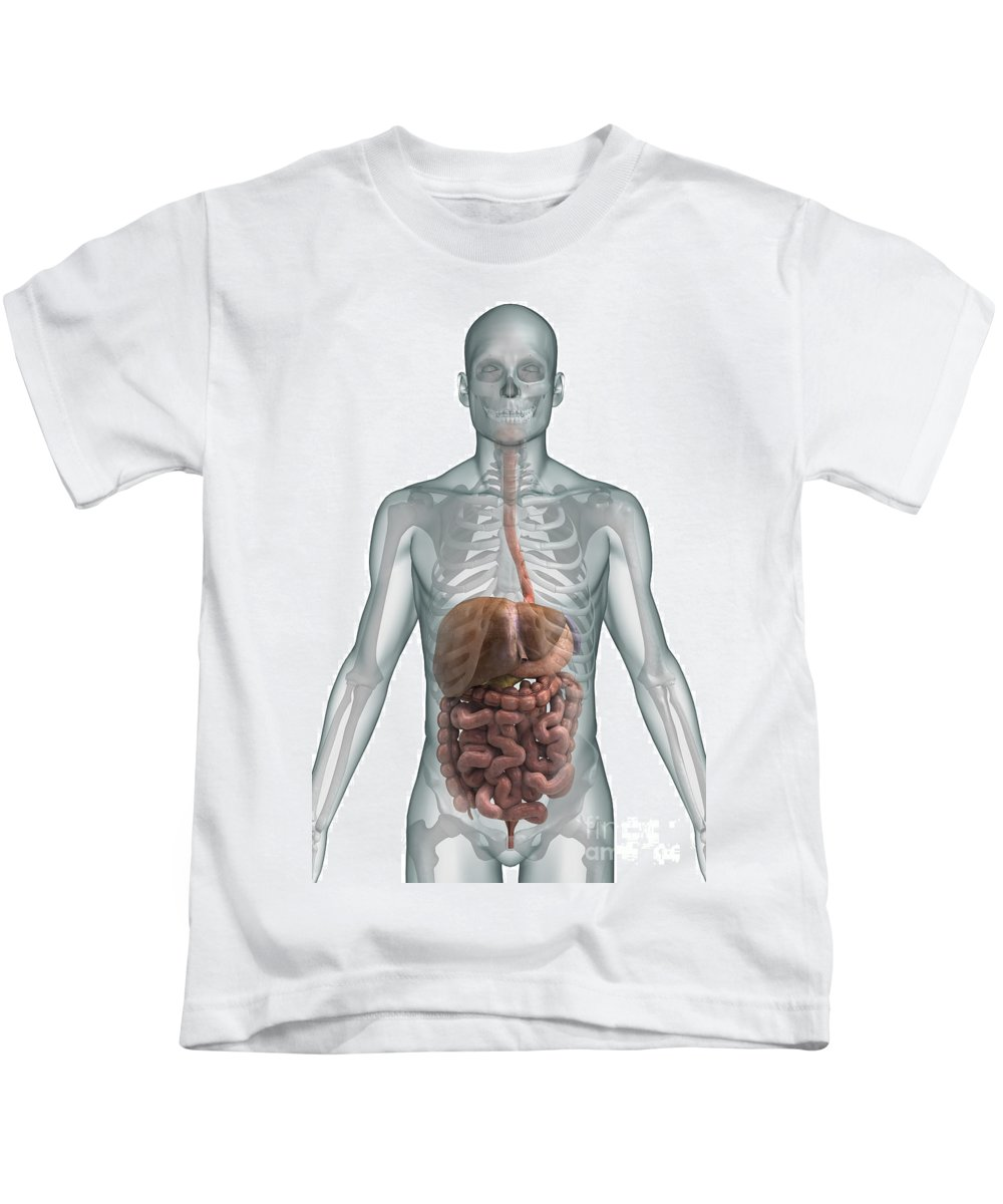 Ascending Colon Kids T-Shirt featuring the photograph The Digestive System by Science Picture Co