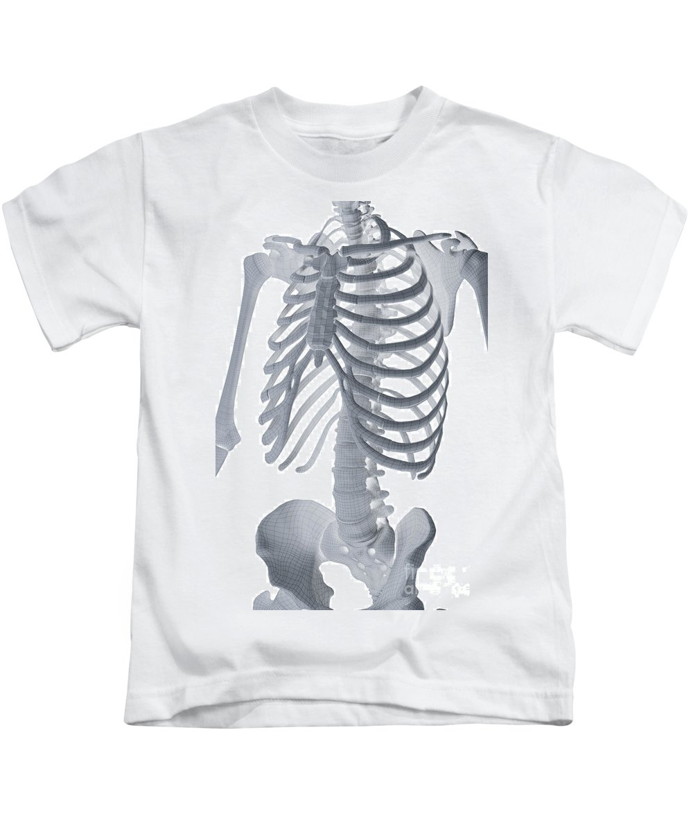 Biomedical Illustration Kids T-Shirt featuring the photograph Bones Of The Torso by Science Picture Co