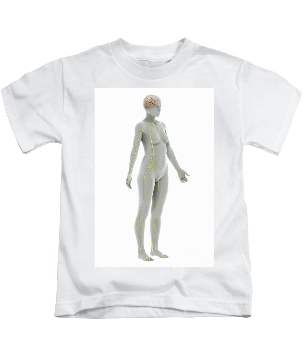 3d Visualisation Kids T-Shirt featuring the photograph The Nervous System Female by Science Picture Co